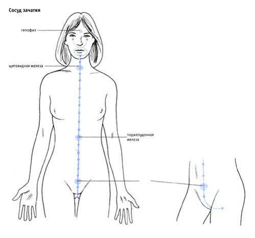 Движения женщины во время оргазма